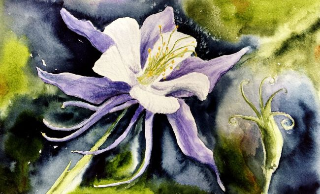 Columbine Flower Watercolor Paintings By Amy Beidleman Note